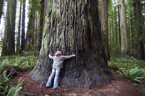big tree hug