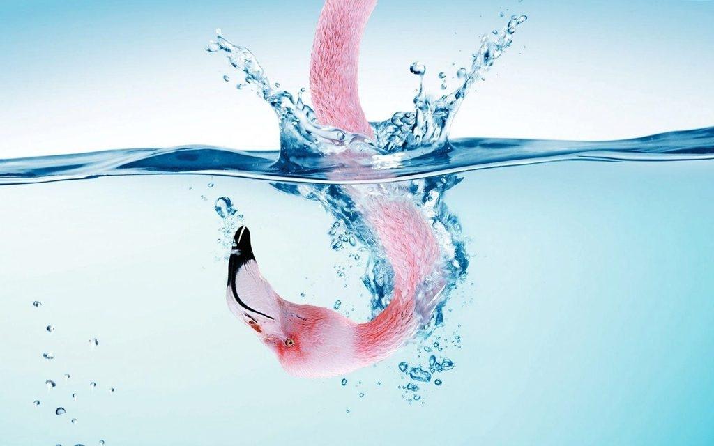 Flamingo Underwater Wallpaper