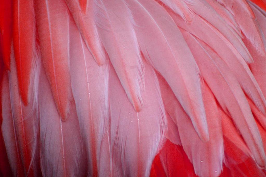 pink-flamingo-feathers-tony-and-kristi-middleton