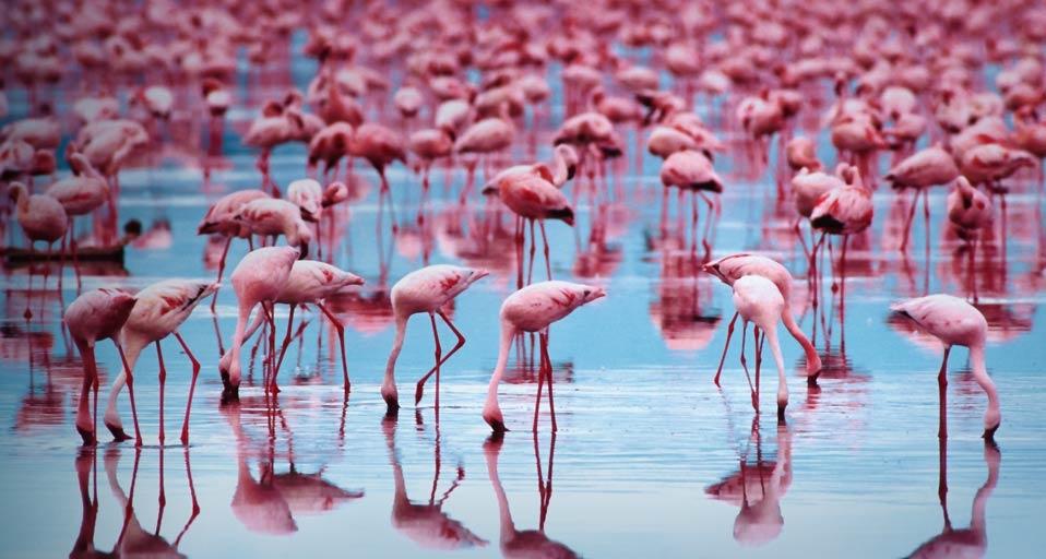 Flamingos_20091016